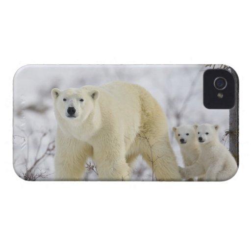 Parque nacional de Wapusk, Canadá Funda Para iPhone 4