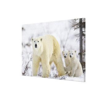 Parque nacional de Wapusk, Canadá Lona Envuelta Para Galerias