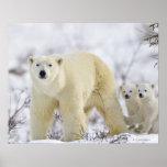 Parque nacional de Wapusk, Canadá Póster