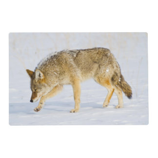 Parque nacional de Wyoming, Yellowstone, coyote Salvamanteles