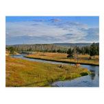 parque nacional de yellowstone, alces, postal
