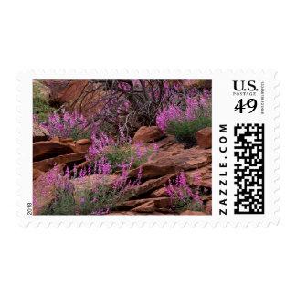 Parque nacional del filón del capitolio, Utah, los Sellos