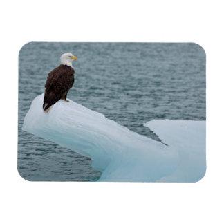 Parque nacional Eagle calvo del Glacier Bay