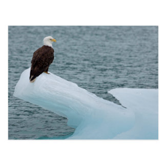 Parque nacional Eagle calvo del Glacier Bay Tarjeta Postal