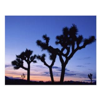 Parque nacional en la puesta del sol, California d Tarjetas Postales