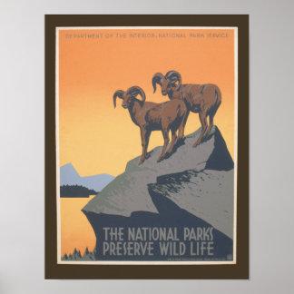 Parque nacional - fauna del coto - poster del vint
