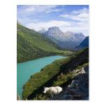 Parque Nacional Glacier, Montana Tarjeta Postal