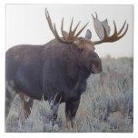 Parque nacional magnífico de Teton, alce de Bull Azulejo Cerámica