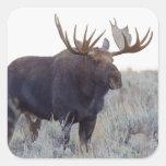 Parque nacional magnífico de Teton, alce de Bull Colcomanias Cuadradases