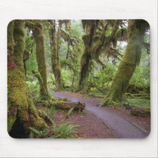 Parque nacional olímpico del bosque tapetes de ratón