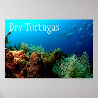 Parque nacional seco de Tortugas, arrecife de Póster