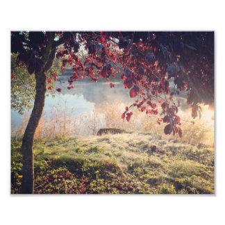 Parque soñador fotografía
