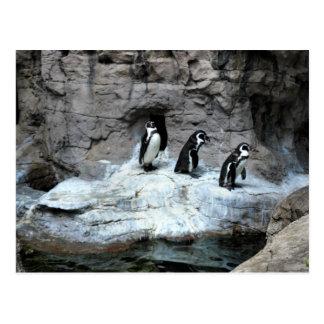 Parque zoológico 2009 de St. Louis Tarjetas Postales