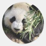 Parque zoológico Atlanta del oso de panda @ Pegatina Redonda