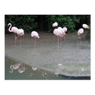 Parque zoológico de Auckland de la danza del Postal