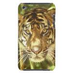 Parque zoológico de California, San Francisco, tig iPod Touch Case-Mate Fundas