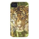 Parque zoológico de California, San Francisco, tig Case-Mate iPhone 4 Funda