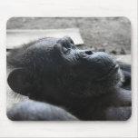 Parque zoológico de Houston Alfombrillas De Raton