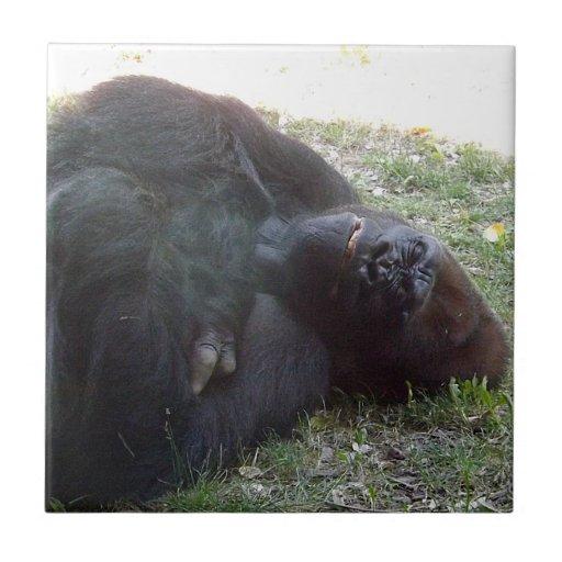 Parque zoológico de Kansas City del gorila de la t Tejas Cerámicas