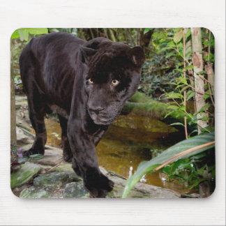 Parque zoológico de la ciudad de Belice. Pantera Tapete De Ratón
