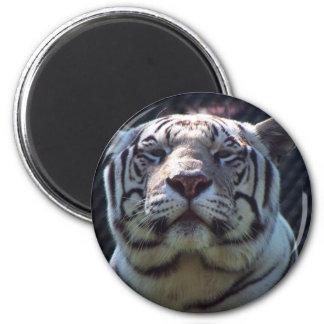 Parque zoológico de Philadephia Imán Redondo 5 Cm
