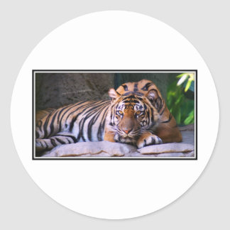 Parque zoológico de Sacramento del tigre Pegatina Redonda