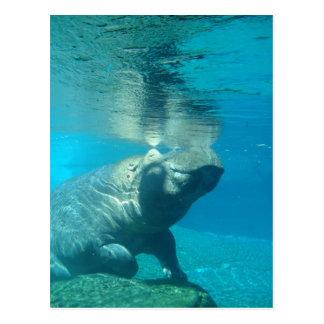 Parque zoológico de San Diego Postales