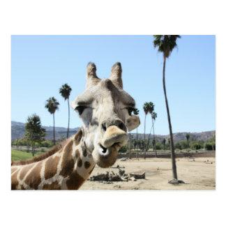 Parque zoológico de San Diego Tarjeta Postal