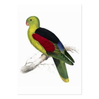 Parrakeet Carmesí-Con alas (adulto masculino) por Tarjetas De Visita Grandes
