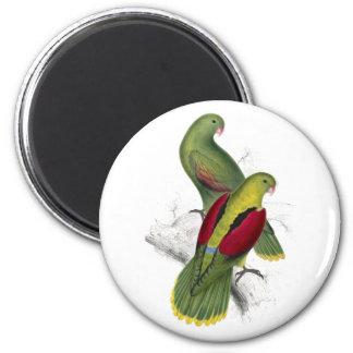 Parrakeet Carmesí-Con alas (varón femenino y joven Imán Redondo 5 Cm