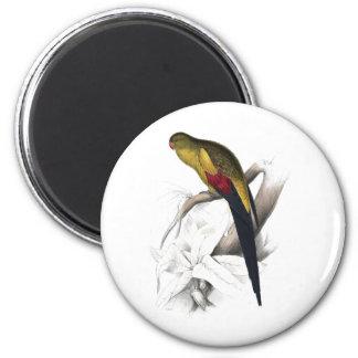 Parrakeet de cola negra de Edward Lear Imán Redondo 5 Cm