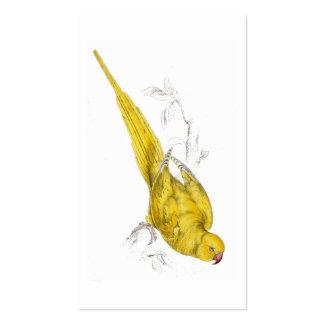 Parrakeet Rosa-Anillado (variedad amarilla) por Tarjetas De Visita