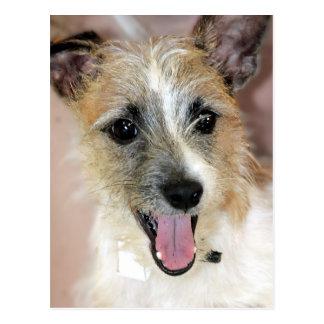 Párroco Russell Terrier/postales de la mezcla de Postal