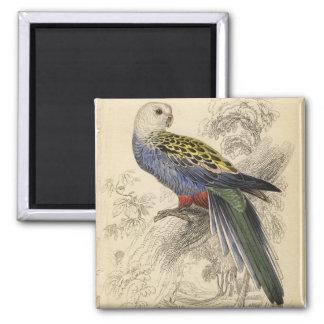 parrot3 magnet
