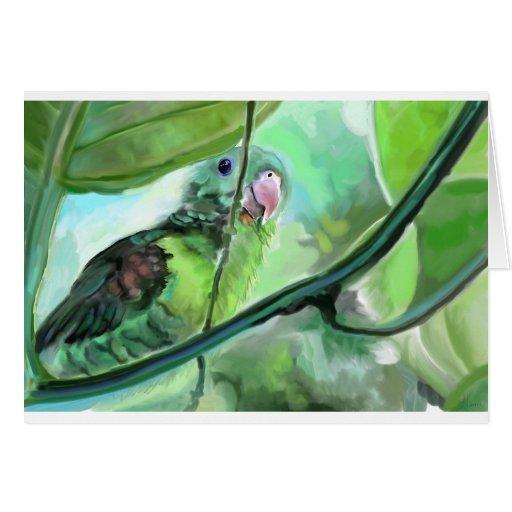 parrot_001.jpg tarjeta de felicitación