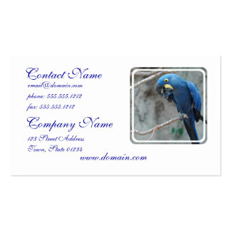 parrot-23 plantilla de tarjeta personal