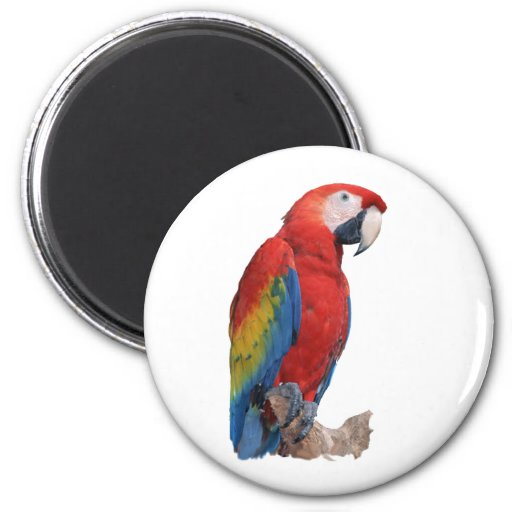 Parrot 2 Inch Round Magnet