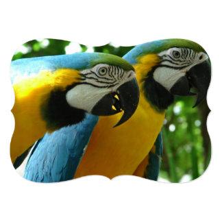 parrot-43.jpg invitación 12,7 x 17,8 cm