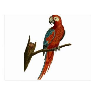 parrot #5 postcard