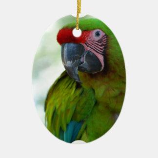 parrot-63.jpg ornamentos de reyes