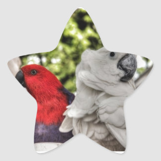 Parrot and Cockatoo Star Sticker
