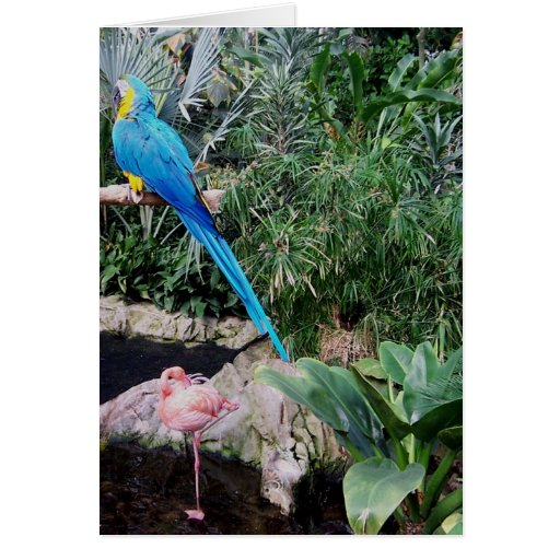 Parrot and Flamingo Greeting Card