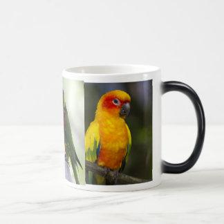 Parrot and Lorikeets Mug