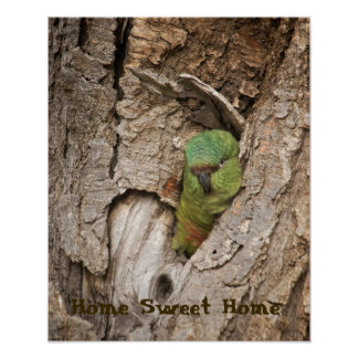 Parrot at home poster