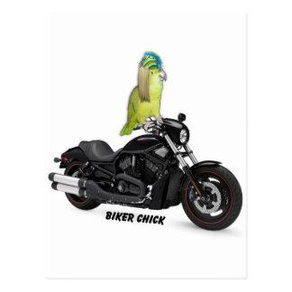 Parrot Biker Chick on Harley Davidson Postcard
