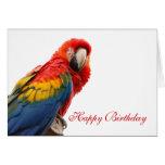 Parrot bird beautiful photo custom birthday card