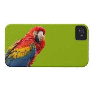 Parrot bird beautiful photo iphone 4 case mate