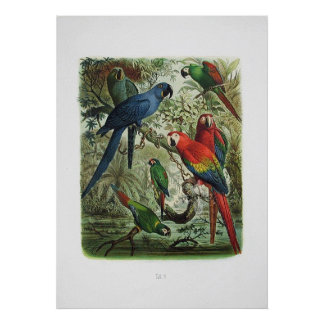 parrot, bird collection poster