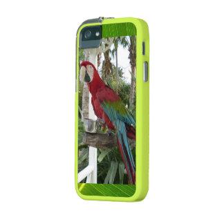 Parrot Bird Pet Green Leaf Photo Nature Destiny Case For iPhone 5