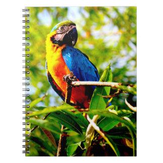 Parrot bird picture notebook